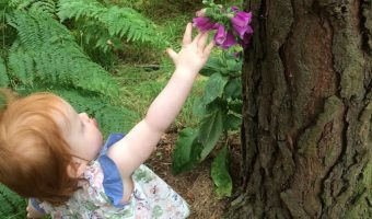 Getting the Kids Involved In Gardening