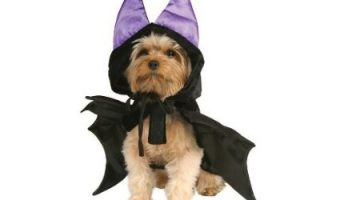 Halloween Accessories to Turn Your Dog into a Terrifying Beast