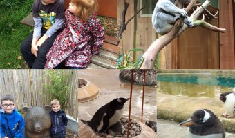 Animals at Edinburgh zoo