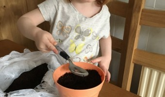 planting the plant