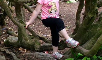 Aberdeen And Tree Climbing  – Our Weekly Photos Week 32