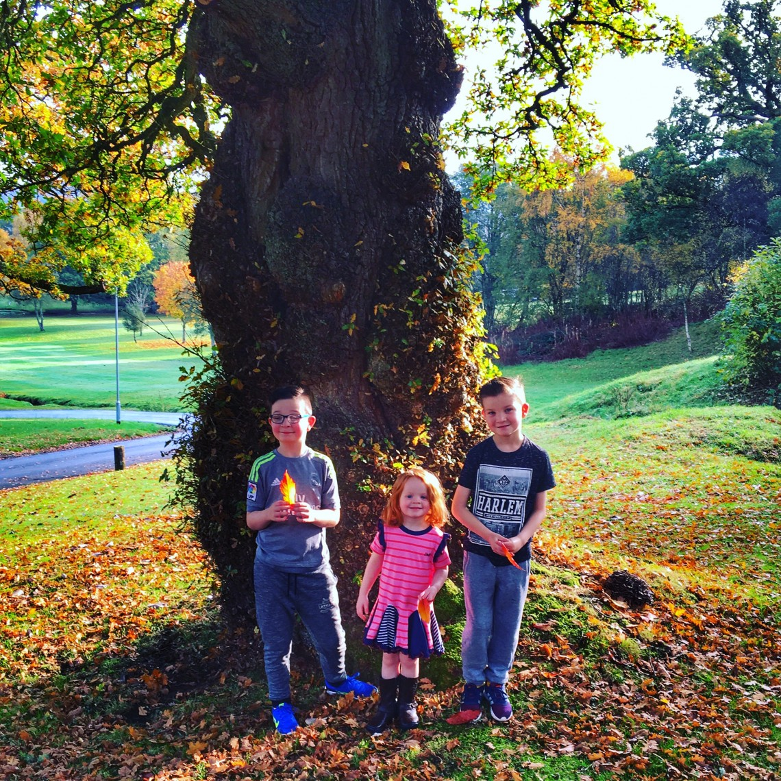autumn-tree-family