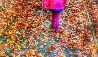Autumn Leafs And Snowfall – Our Weekly Photos Week 46