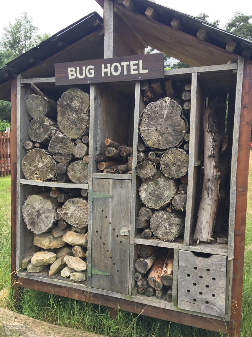 Bug Hotel Forest Holidays