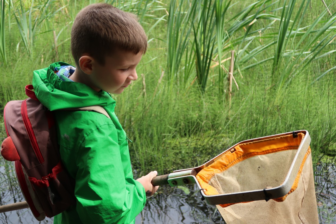 Looking for pond creatures