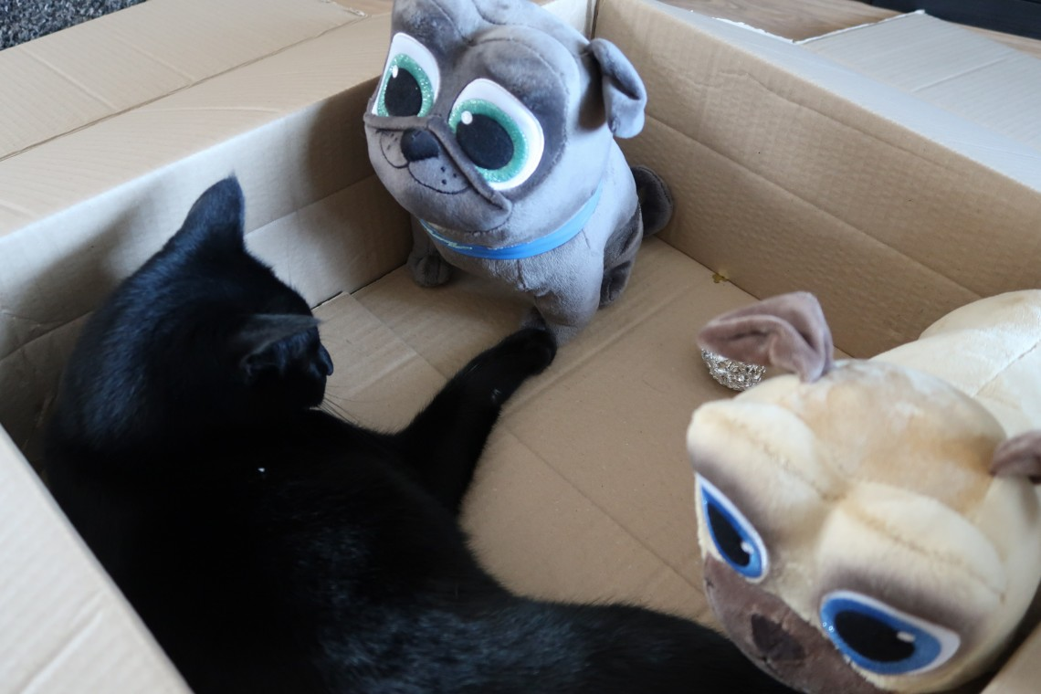 Cat playing Puppy Dog Pals