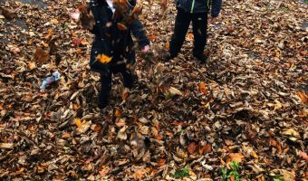 Autumn Leaves, Baking And Wellies Our Weekly Photos – Week 45